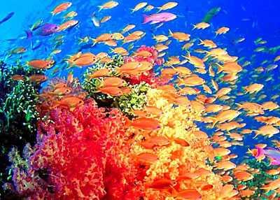 新澳海底世界的