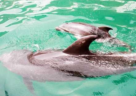 秦皇岛新澳海底世界诞生海豚宝宝